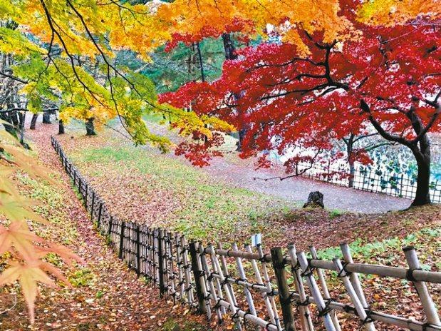 此時的日本北部,猶如一塊五顏六色的調色盤,美不勝收。 陳志光/攝影