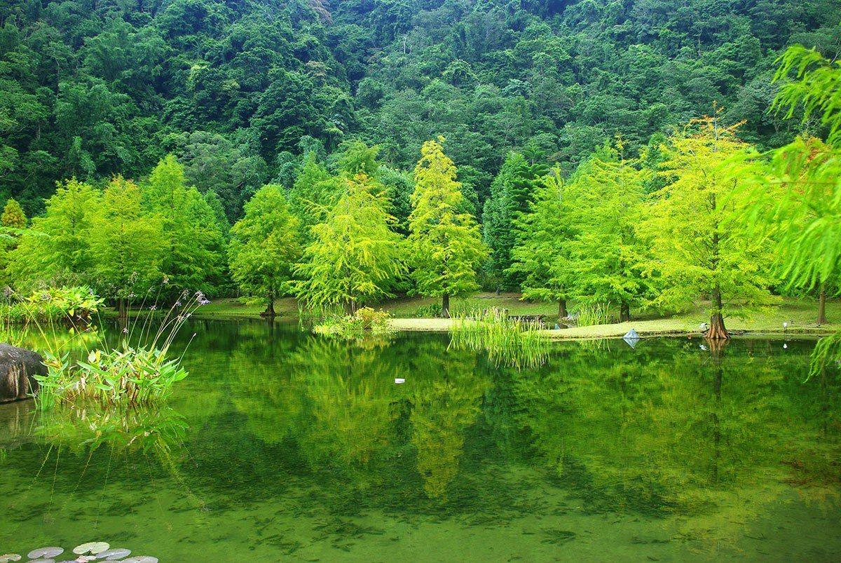 青山與落羽松倒影景致為羽松湖草原最吸引人的風景。 圖片提供雲水度假森林