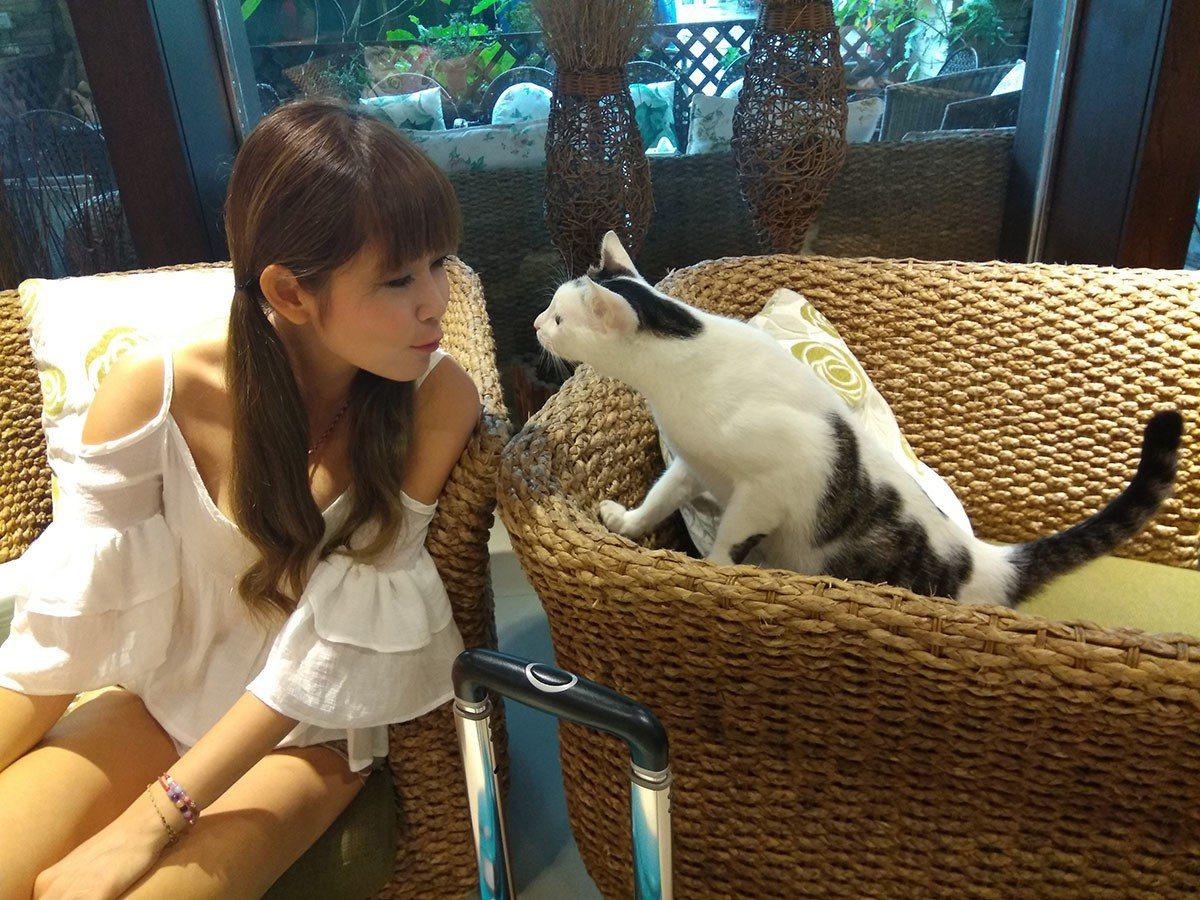 這裡歡迎寵物入住,入住還有貓經理迎接。