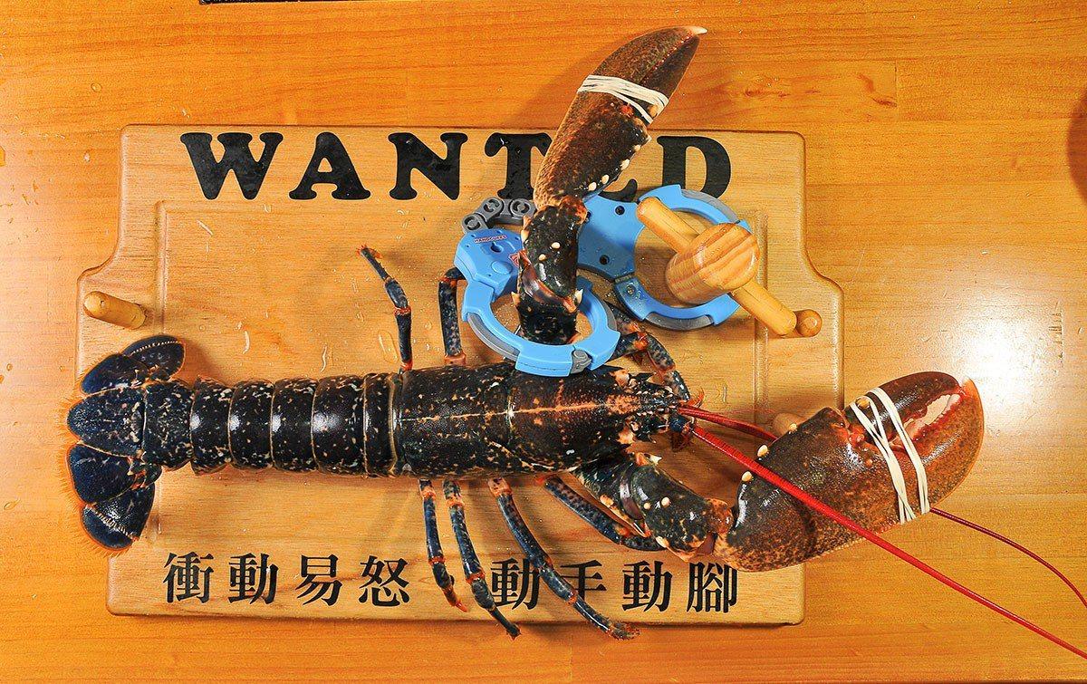 只生長在法國布列塔尼海域的藍龍蝦, 兩百萬分之一的基因突變成藍色, 是老饕心目中...