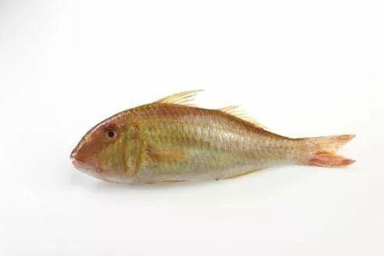 兩男子電捕到1.1兩的小魚致其死亡 被判3年罰2千