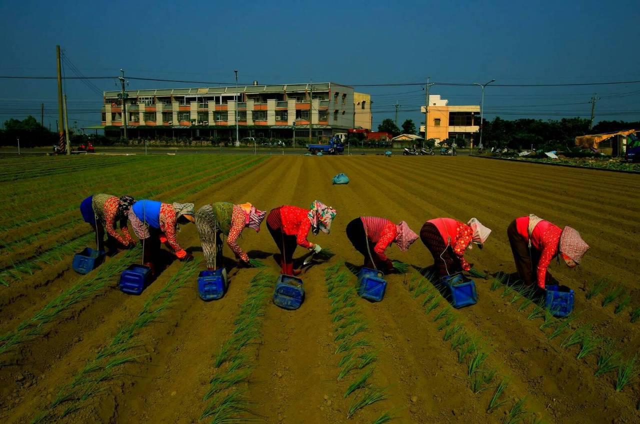 來自高雄市的黃錦蓮,以7名婦女排列在田間工作的作品「種蔥」,獲得第七屆「燈花朴子...