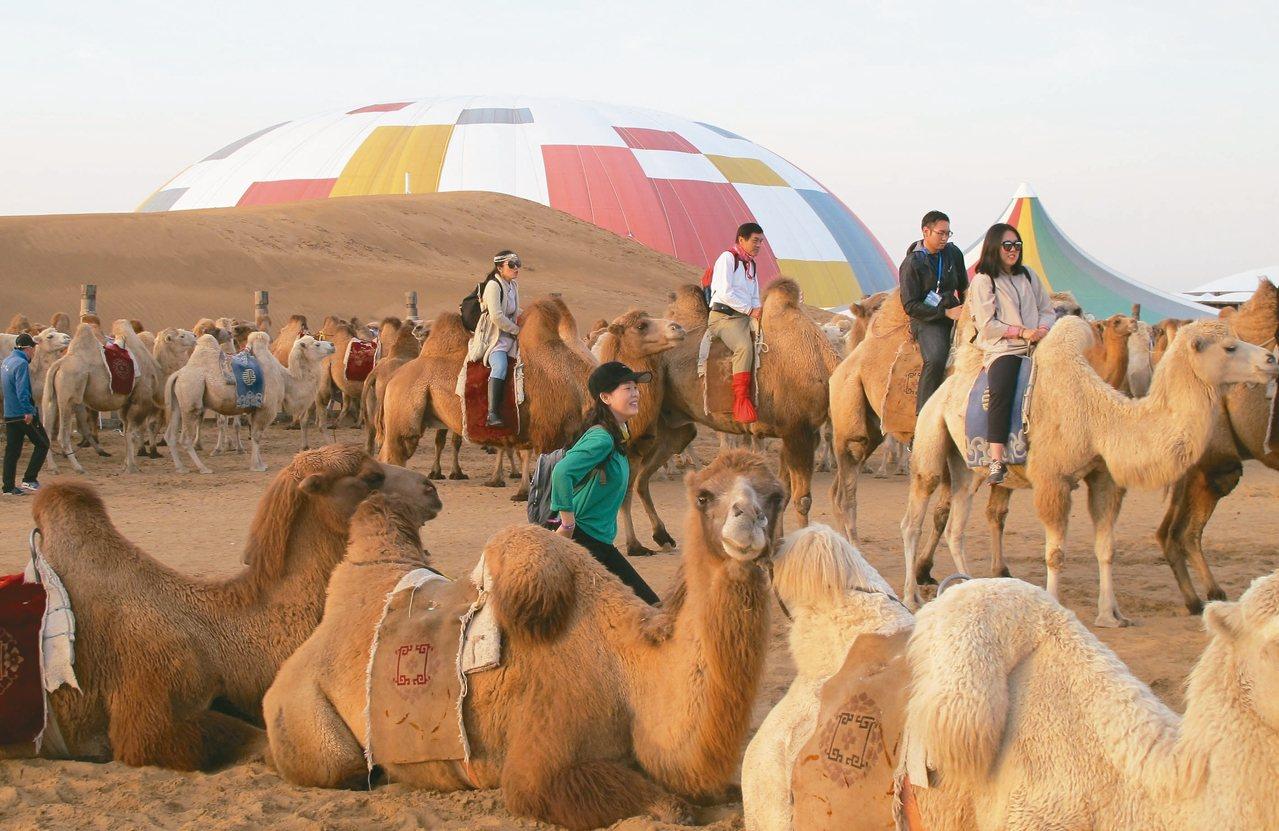 內蒙古響沙灣騎駱駝,是觀光客的最愛。 記者章淑曼/攝影