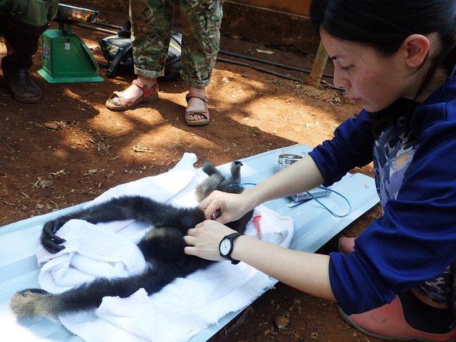 野生動物救援需長期照顧與野放訓練,投入龐大的人力、精神。圖擷取自花蓮野灣野生動物...