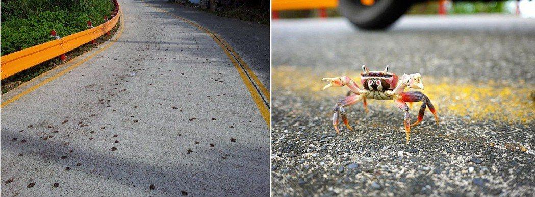 小型陸蟹的斑斑屍痕,一個早上就有無數生命從海洋生態系中消失。圖擷取自路殺社