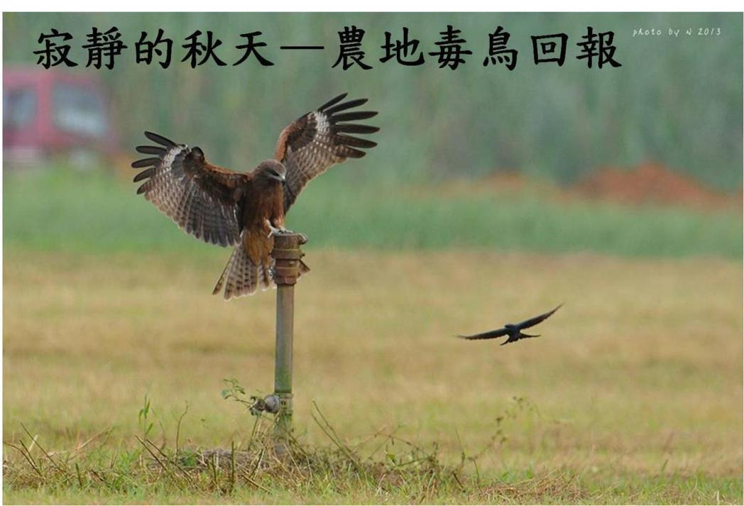 路殺社動員民眾發起的「毒鳥回報」。圖擷取自路殺社