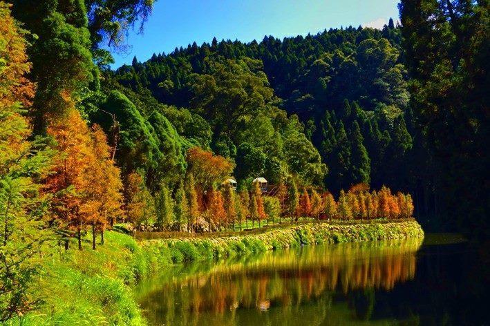 入園收費站的土地廟旁,沿著溪流可見整片水杉。圖/摘自愛上杉林溪粉絲團