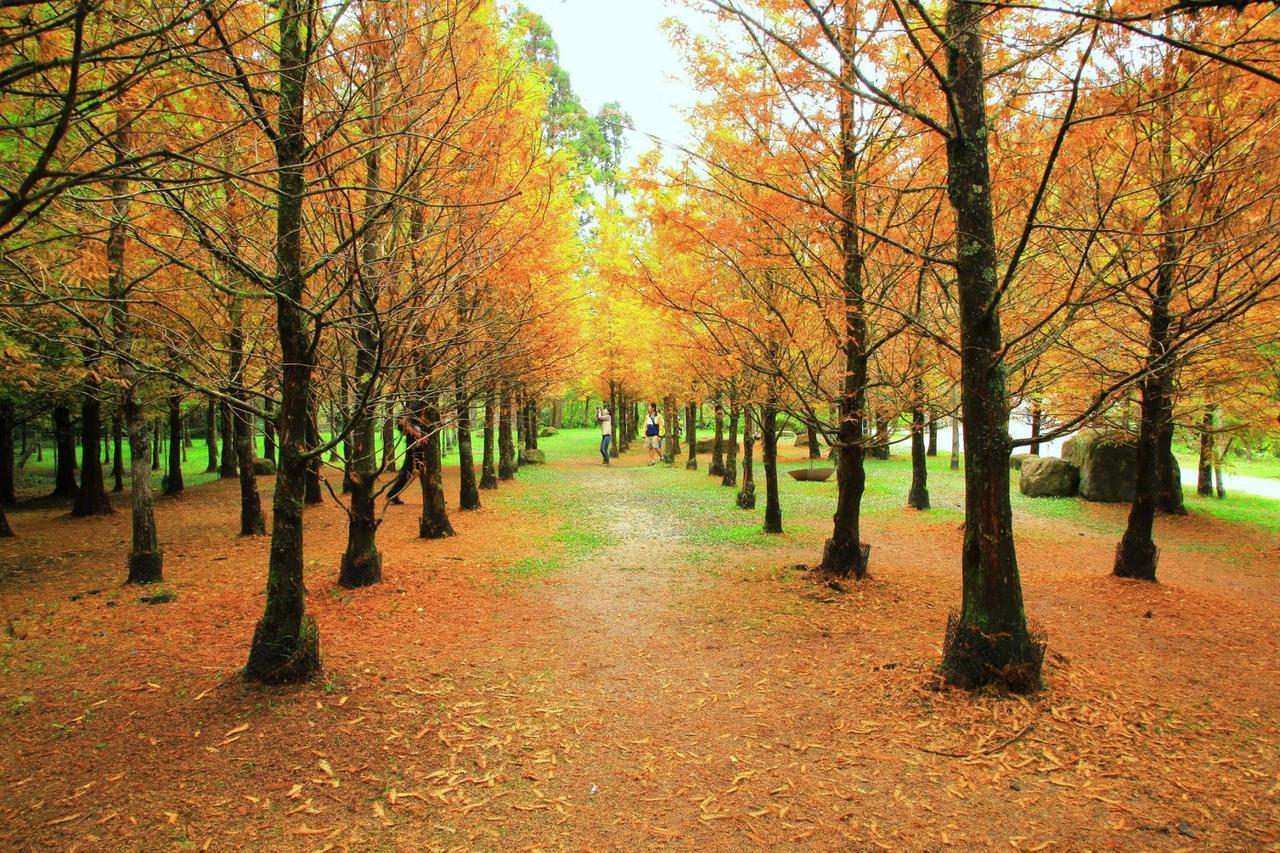 園區內約有500棵水杉。圖/摘自愛上杉林溪粉絲團