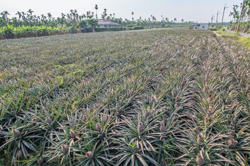 依據內政部國土計畫草案,屏東縣有八萬公頃土地被劃為農業發展區,其中六萬公頃被劃作...
