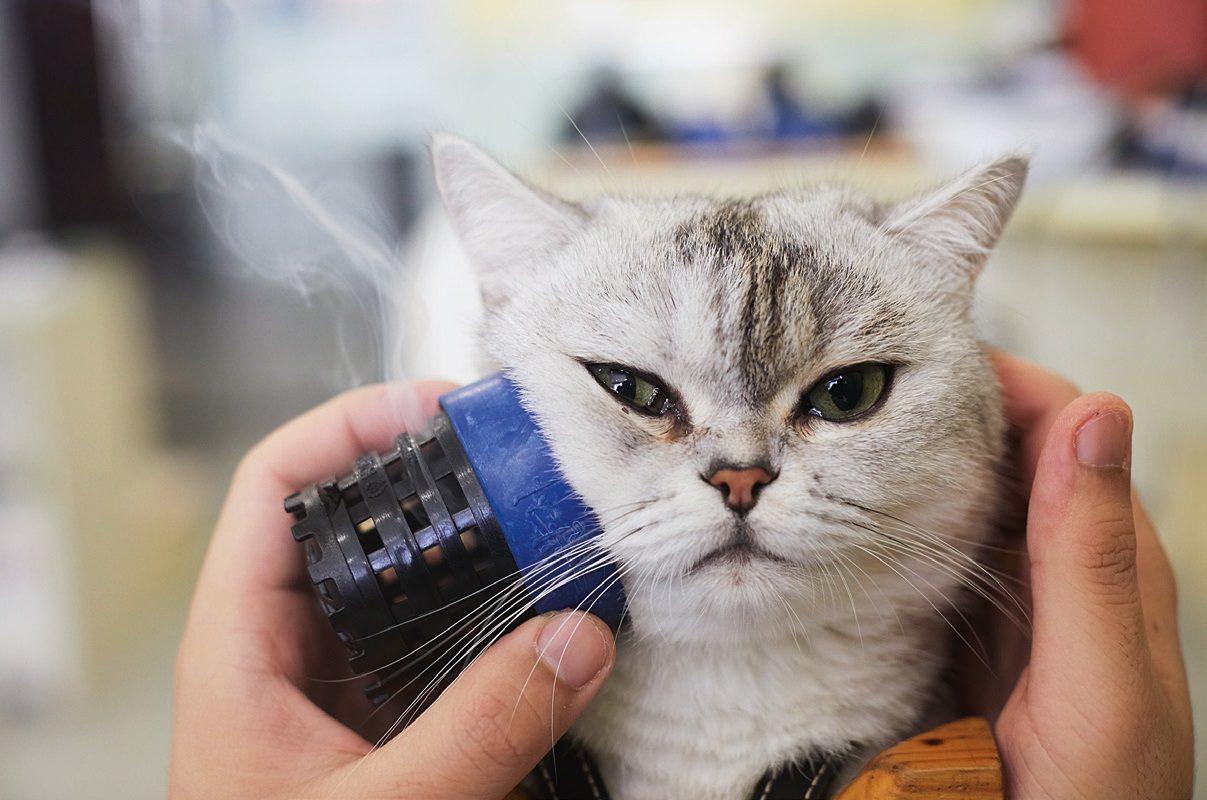 網路上有很多網紅貓咪以面癱著名,牠們有的做出鬼臉,有的舉止怪異,觀們多半會把牠當...