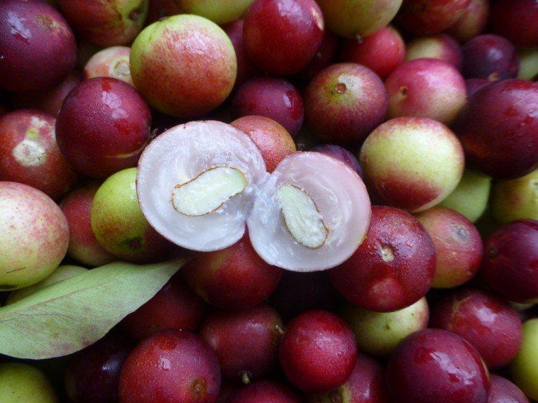 卡姆果(Camu Camu) 圖片提供/食力