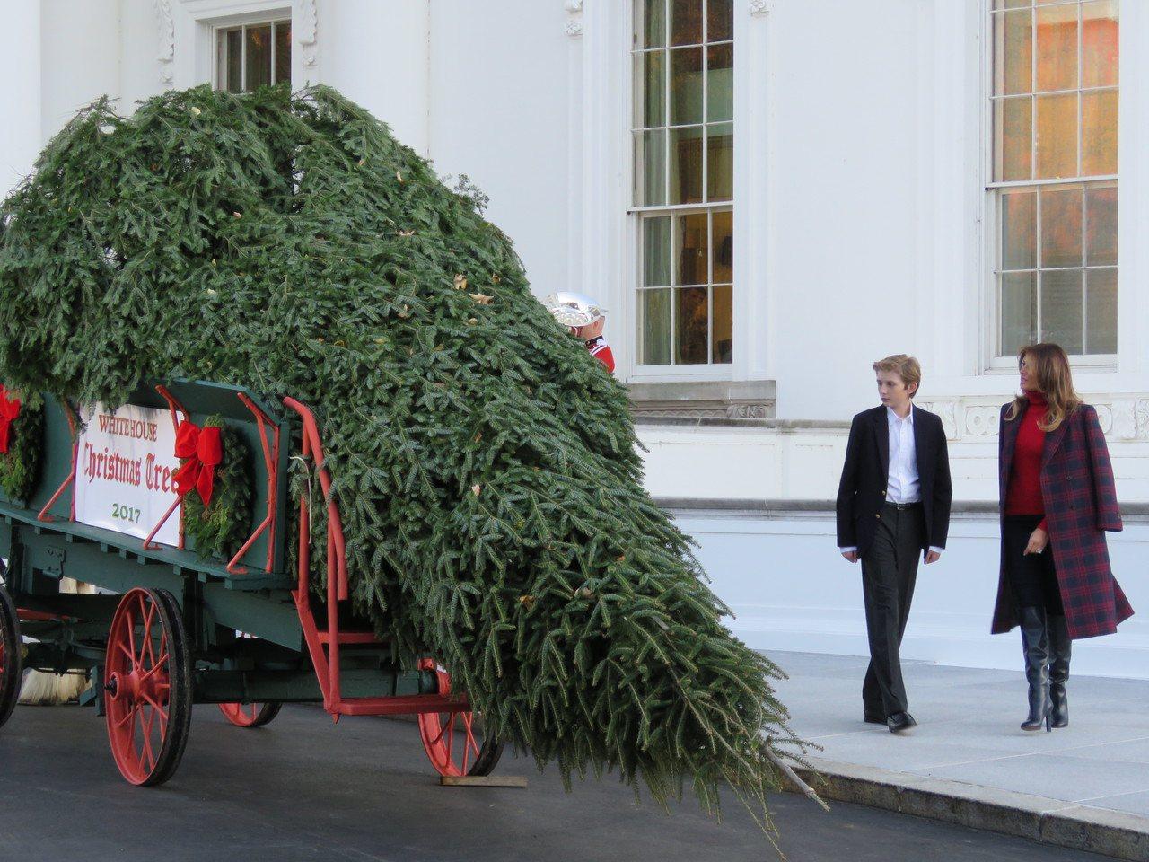 美國第一夫人梅蘭妮亞(右)與兒子拜倫(左)20日下午一同迎接白宮聖誕樹。華盛頓記...
