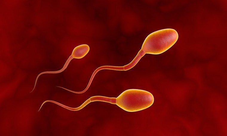 精子示意圖。圖/ingimage