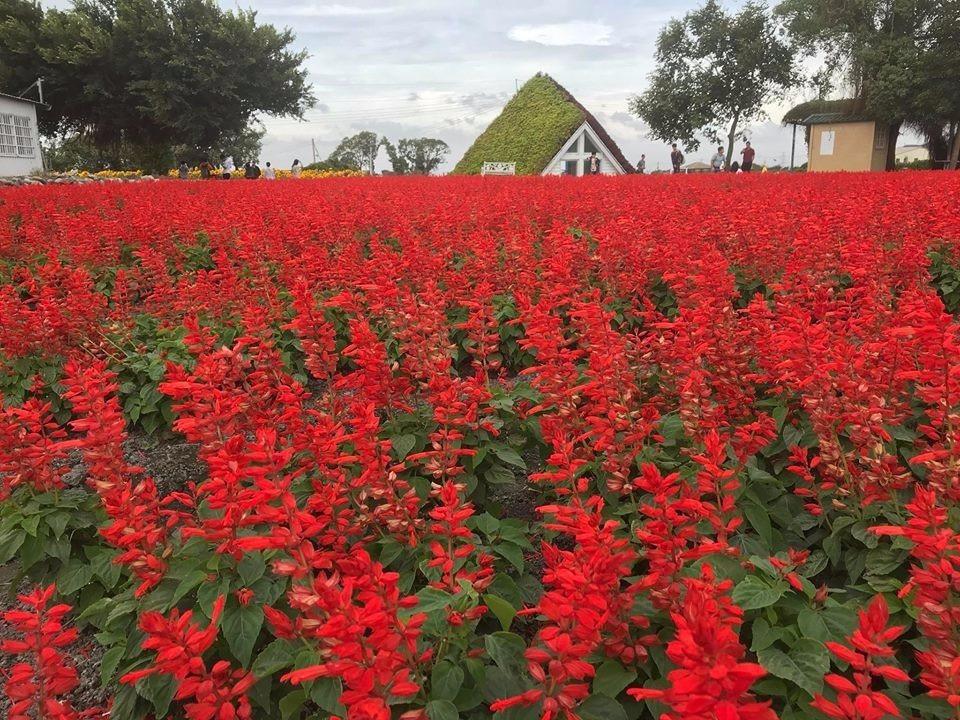 誰說秋冬只能是無聊的顏色!美麗的景色可多著!(圖/中社觀光花市-官網FB)