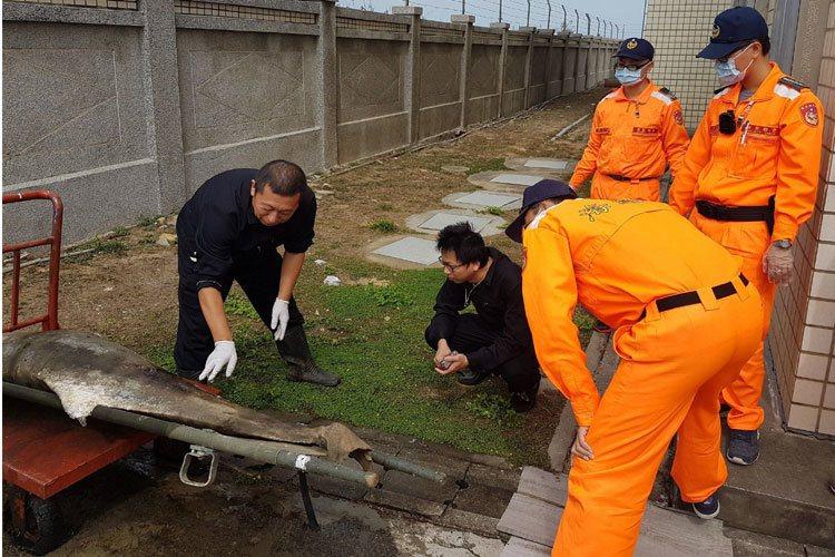 海巡人員處理已死亡的中華白海豚。圖/ 海巡總隊提供