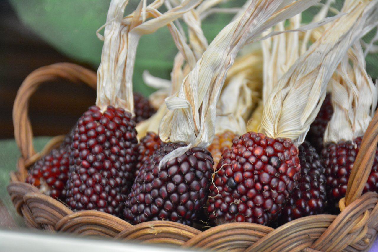 長得小巧可愛的「草莓」玉米。記者吳淑玲/攝影