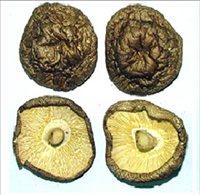 本土菇傘表面都呈褐色至深褐色皺縮狀,菌褶色澤淺黃,菇腳有修剪,香氣濃郁。圖/取自...