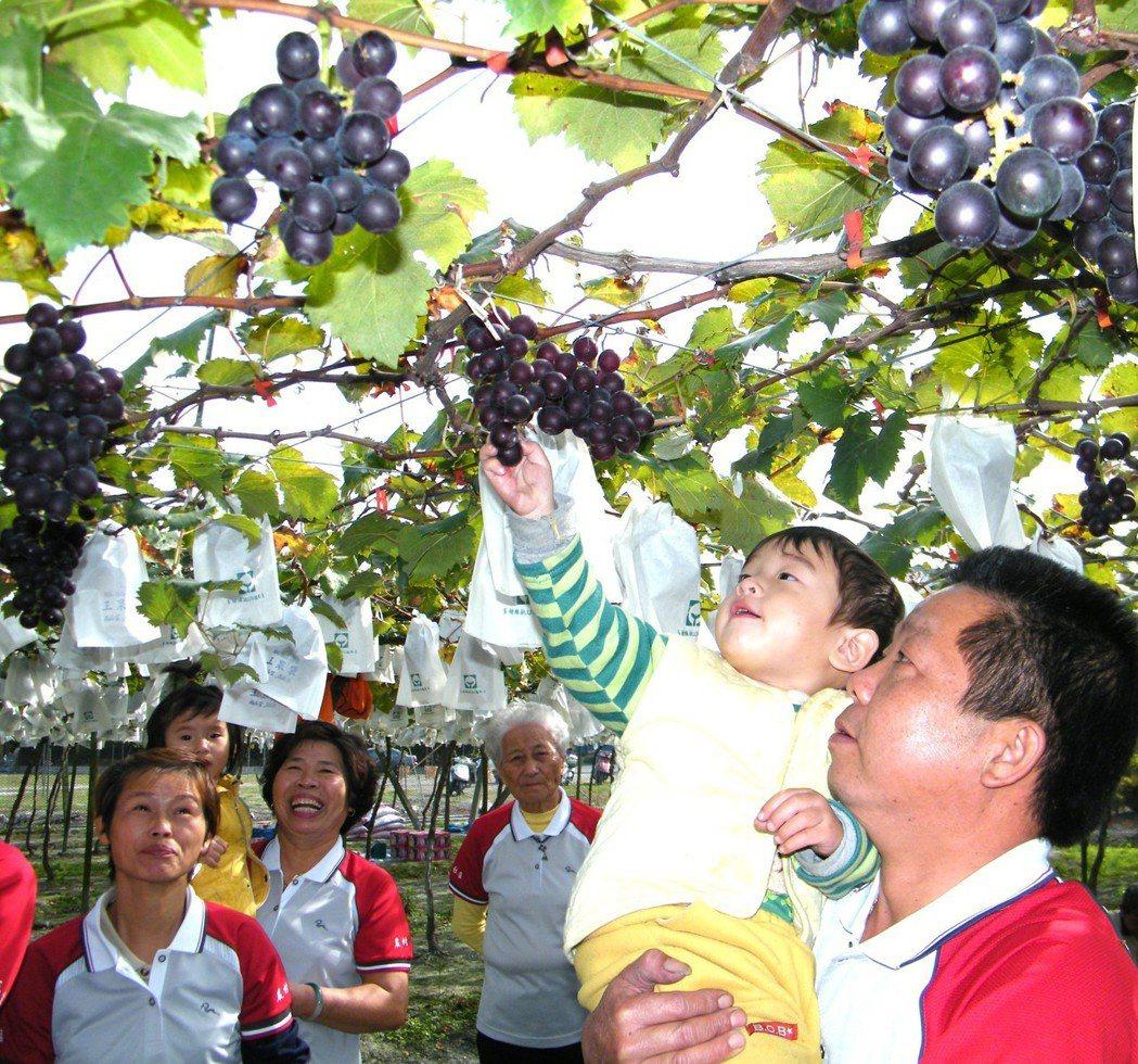 彰化縣大村鄉是葡萄之鄉,賴是第一大姓。 本報資料照