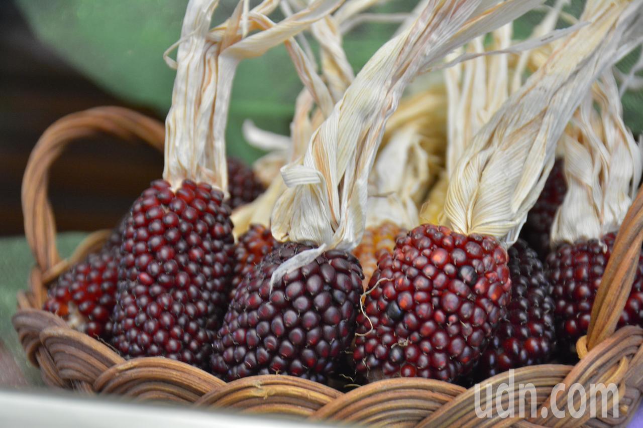 可愛小巧的「草莓玉米」,乍看之下像桑椹果實 。記者吳淑玲/攝影