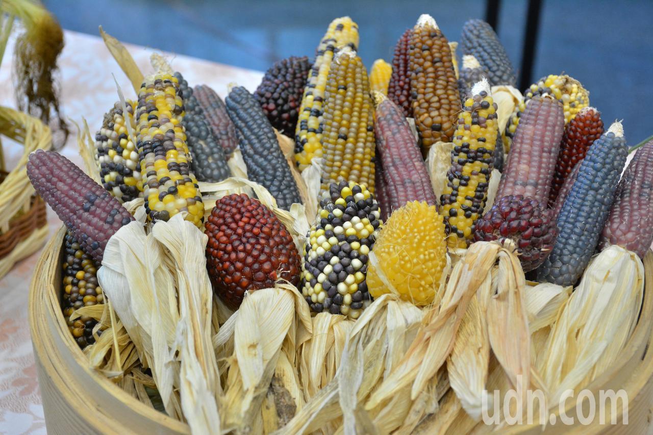 各式各樣的觀賞用玉米。記者吳淑玲/攝影