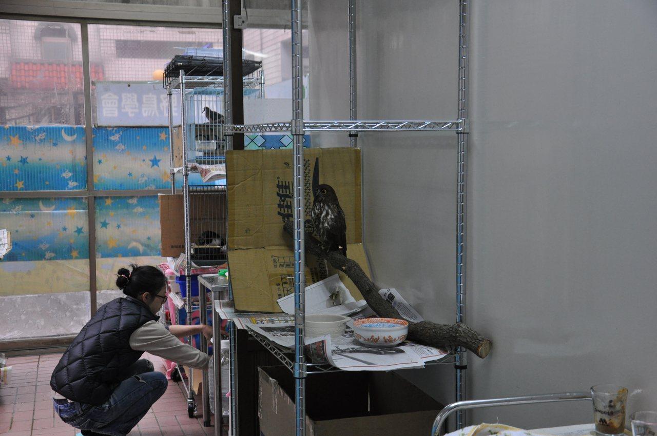桃園市野鳥學會搬新家,位於桃園區宏昌十二街新址設置生態教育館,並有空間做為受傷失...
