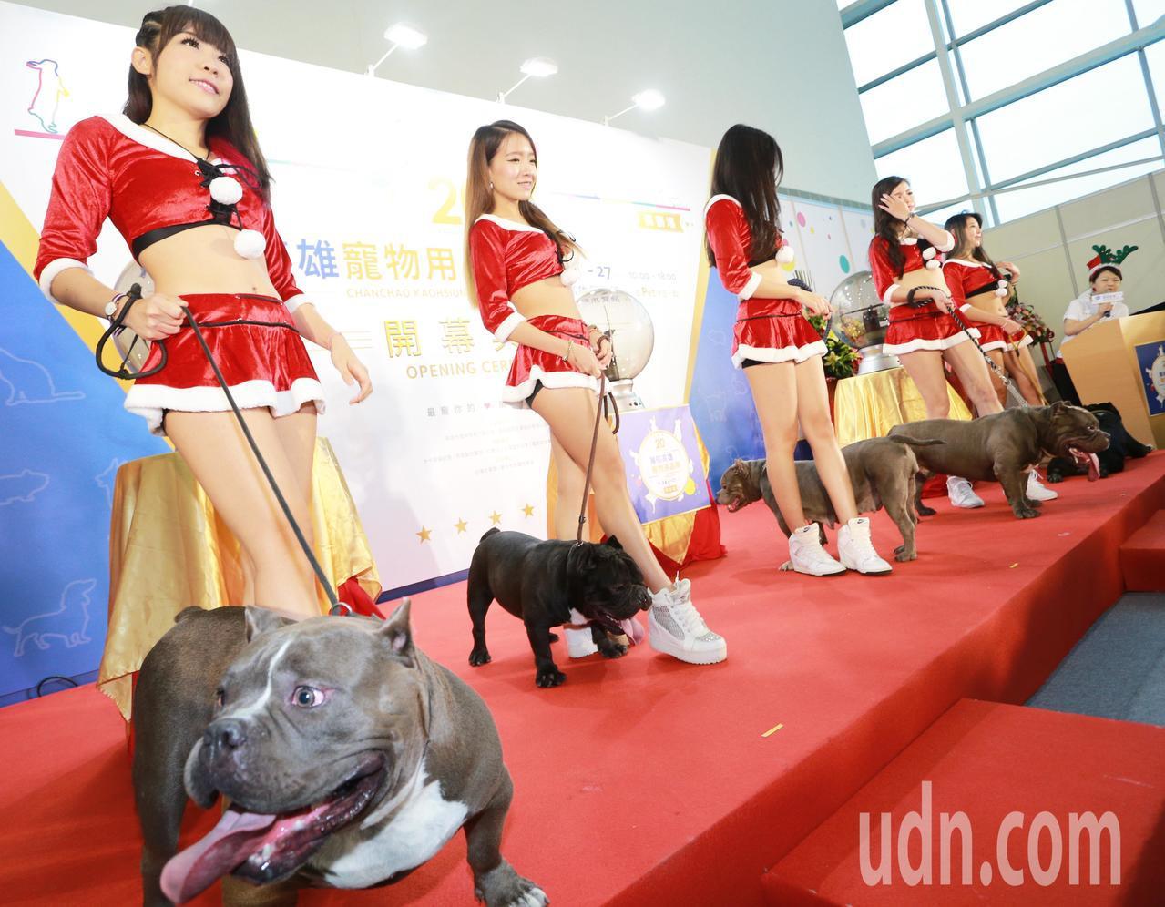 全台最大「高雄寵物用品展」請來5位穿著火辣耶誕裝女郎大秀身材,手牽總價破500萬...