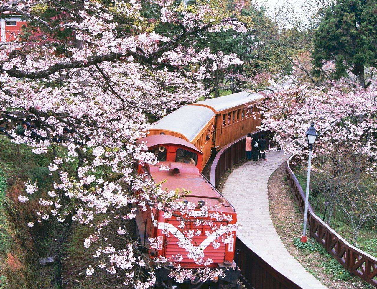 阿里山森林鐵路,不只是鐵道迷的最愛,每年櫻花季也都吸引大量遊客上山。現在卻傳出營...