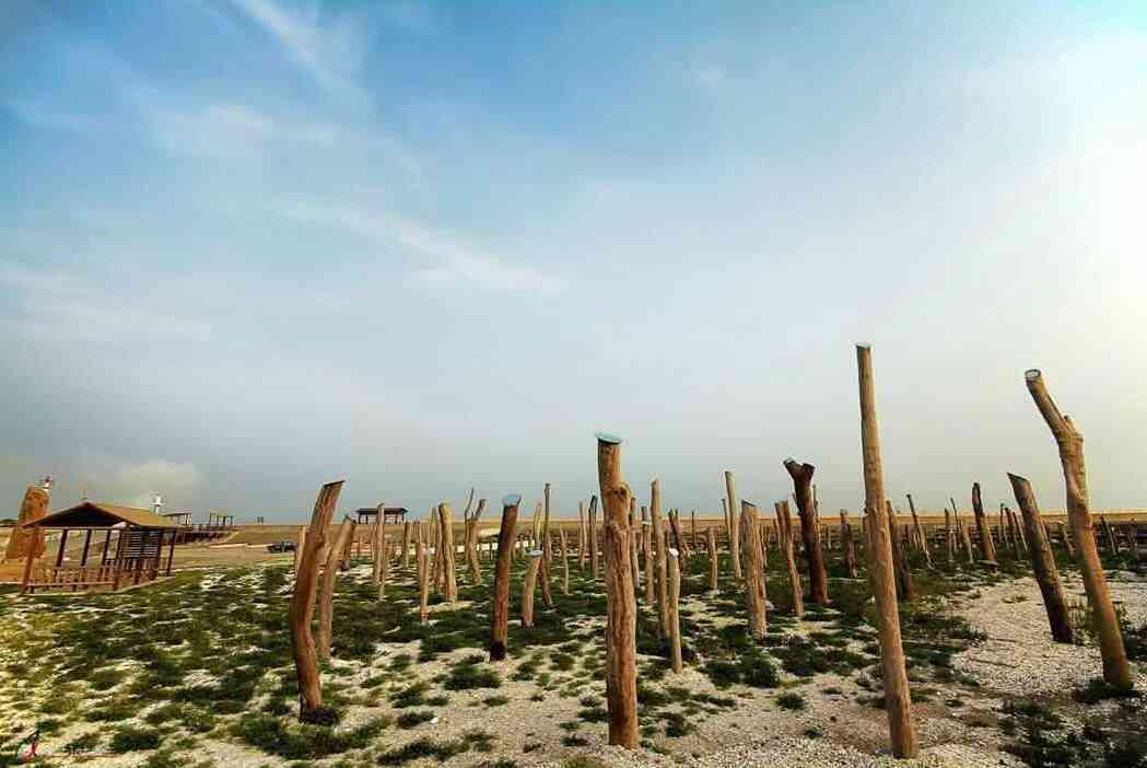 福寶濕地漂流木景點。 圖/吳農夫攝影
