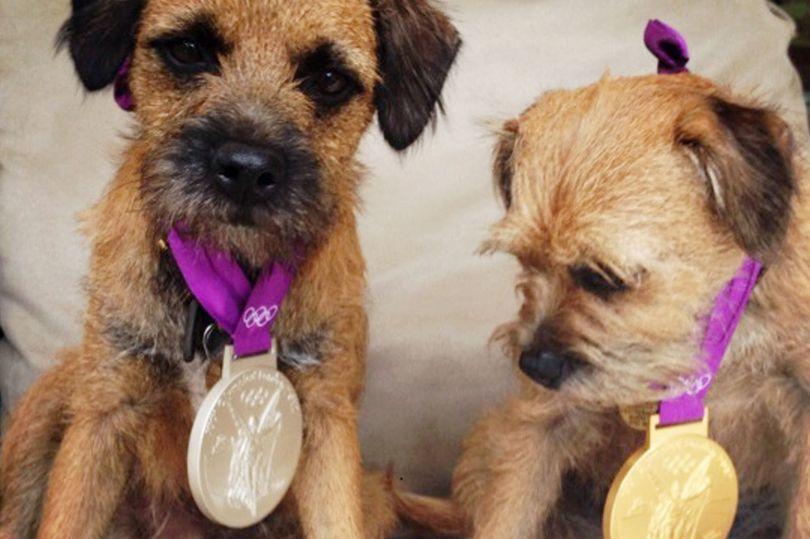希爾絲透過愛犬Maggie May的推特帳戶,貼出兩隻狗狗戴上奧運獎牌的照片。圖...