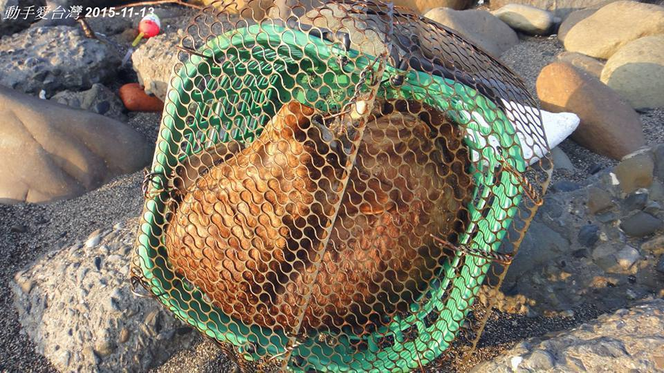 籠子綁住一隻被溺死的貓。圖/陳信助提供