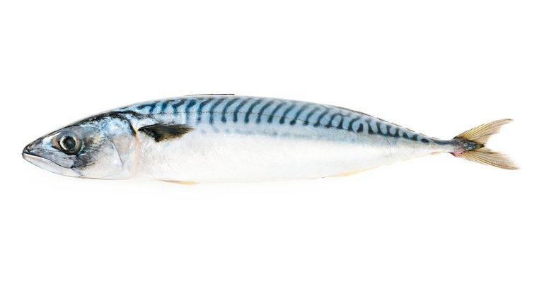 用手從魚尾處水平提起,魚體出現「ㄇ」字形的彎度時,魚貨可能不新鮮。 圖/元氣周報