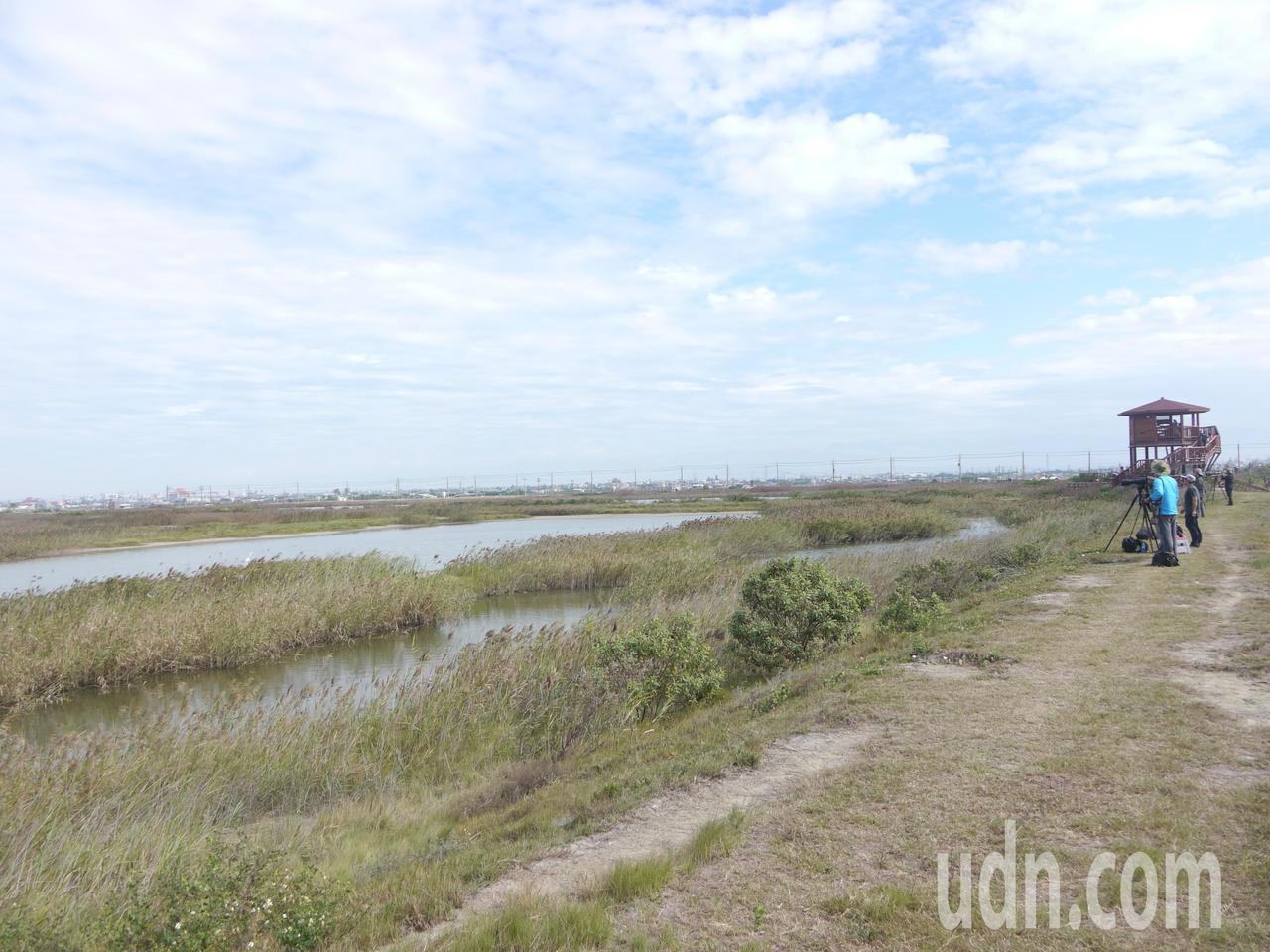 茄萣濕地野鳥種類眾多,吸引許多賞鳥人士駐守觀看。記者徐白櫻/攝影