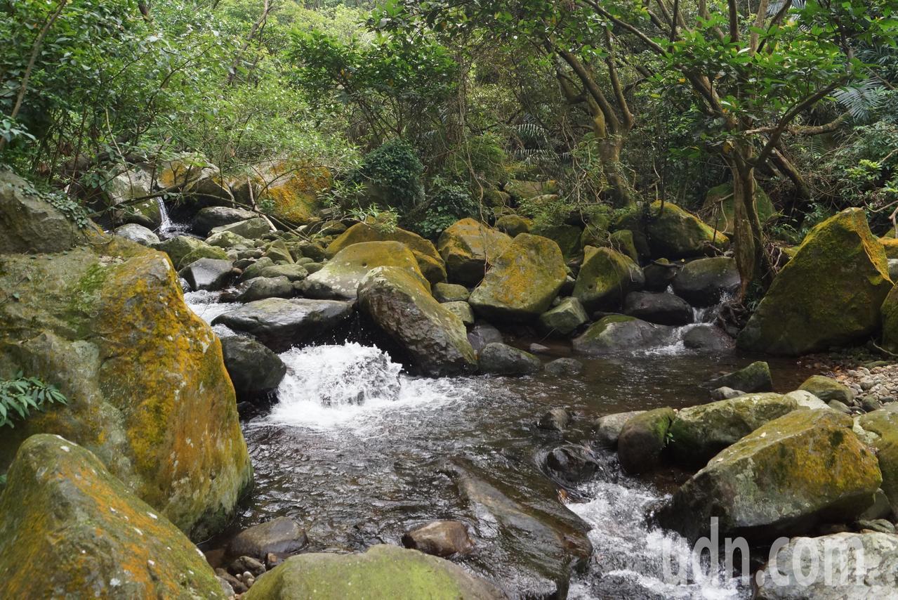 青山瀑布屬於陽明山國家公園境內,保有豐富的原始林木景觀。記者曾健祐/攝影
