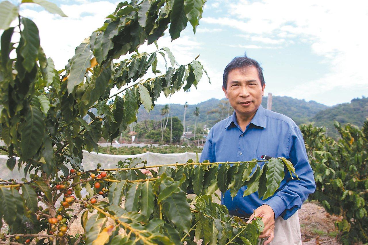 海豐社區理事長林俊陸推廣咖啡產業,在彰化咖啡評鑑拿特等獎。 記者林宛諭/攝影