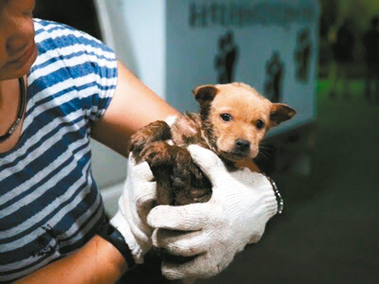 動保處人員經常處理幼犬跌落水溝的案件,被救起的狗狗驚魂未定。 記者陳珮琦/翻攝