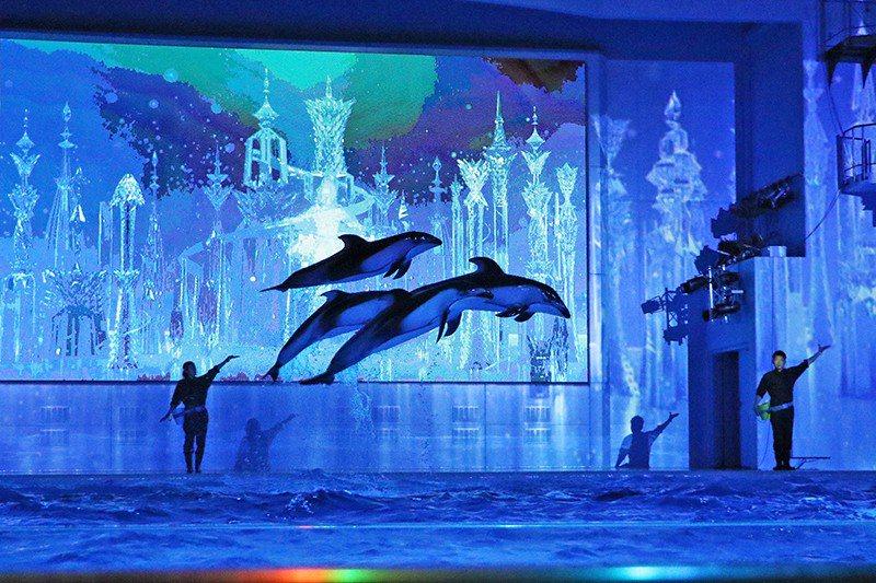 宛如芭蕾舞者一般,海豚們隨著音樂和燈光優雅舞動。