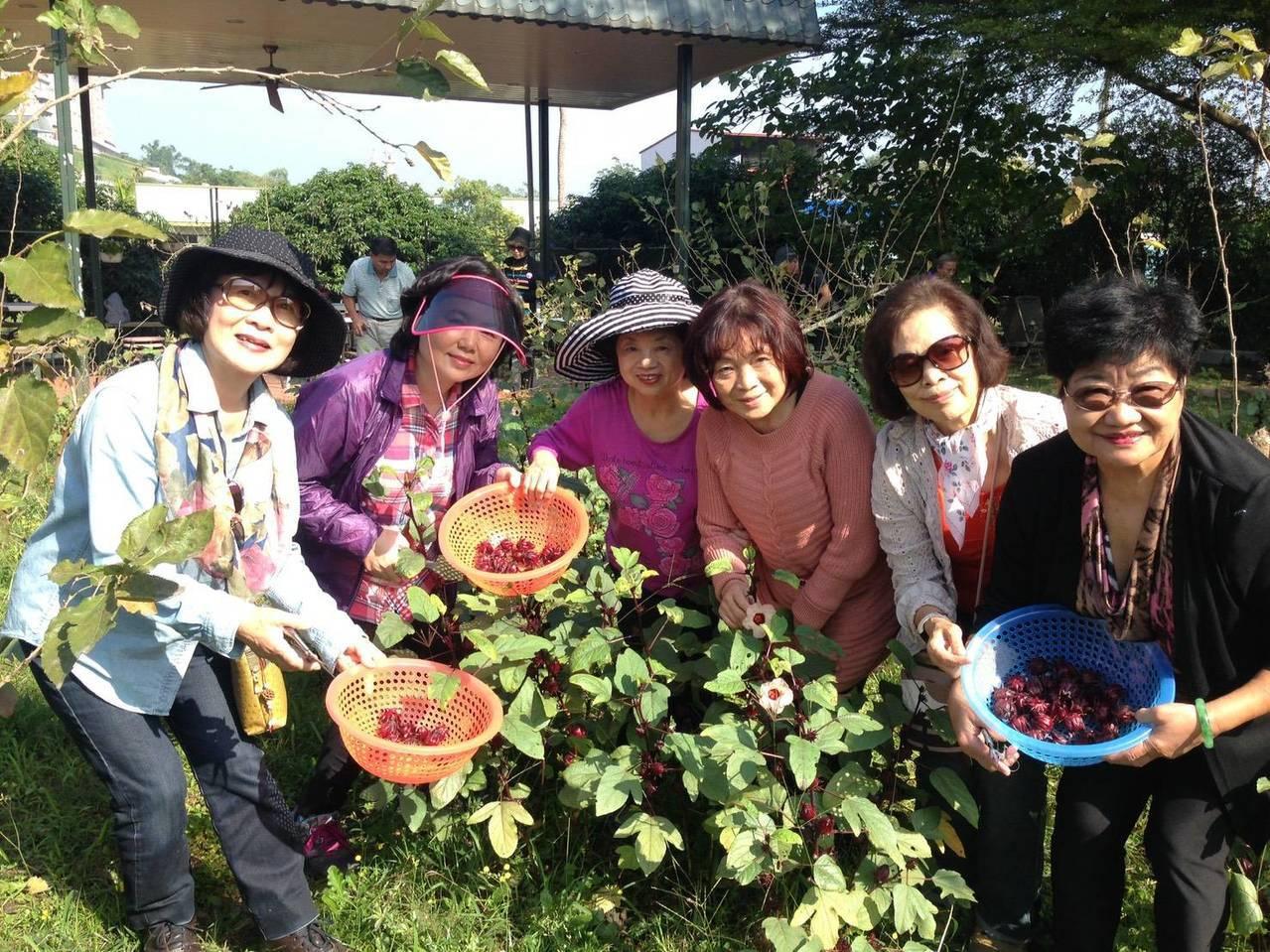 許多人愛到農村體驗田園生活。 圖/高雄市農業局提供