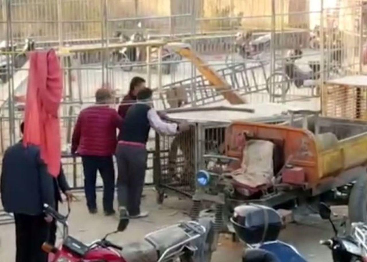 山西馬戲團老虎衝出鐵籠,觀眾四散逃命,2人受傷。 圖擷自星島日報