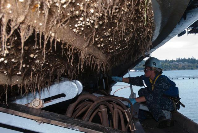 附著在船殼上的藤壺如果不定期清理,將導致軍艦的航速越來越慢。 圖/取自網路