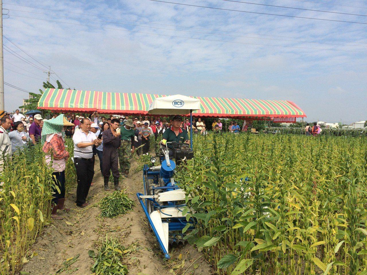 台南區農業改良場從國外引進乘坐式割捆機並加以改良,可大幅改善胡麻採收人力缺乏問題...