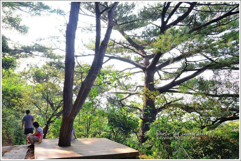 ↑松樹平台。