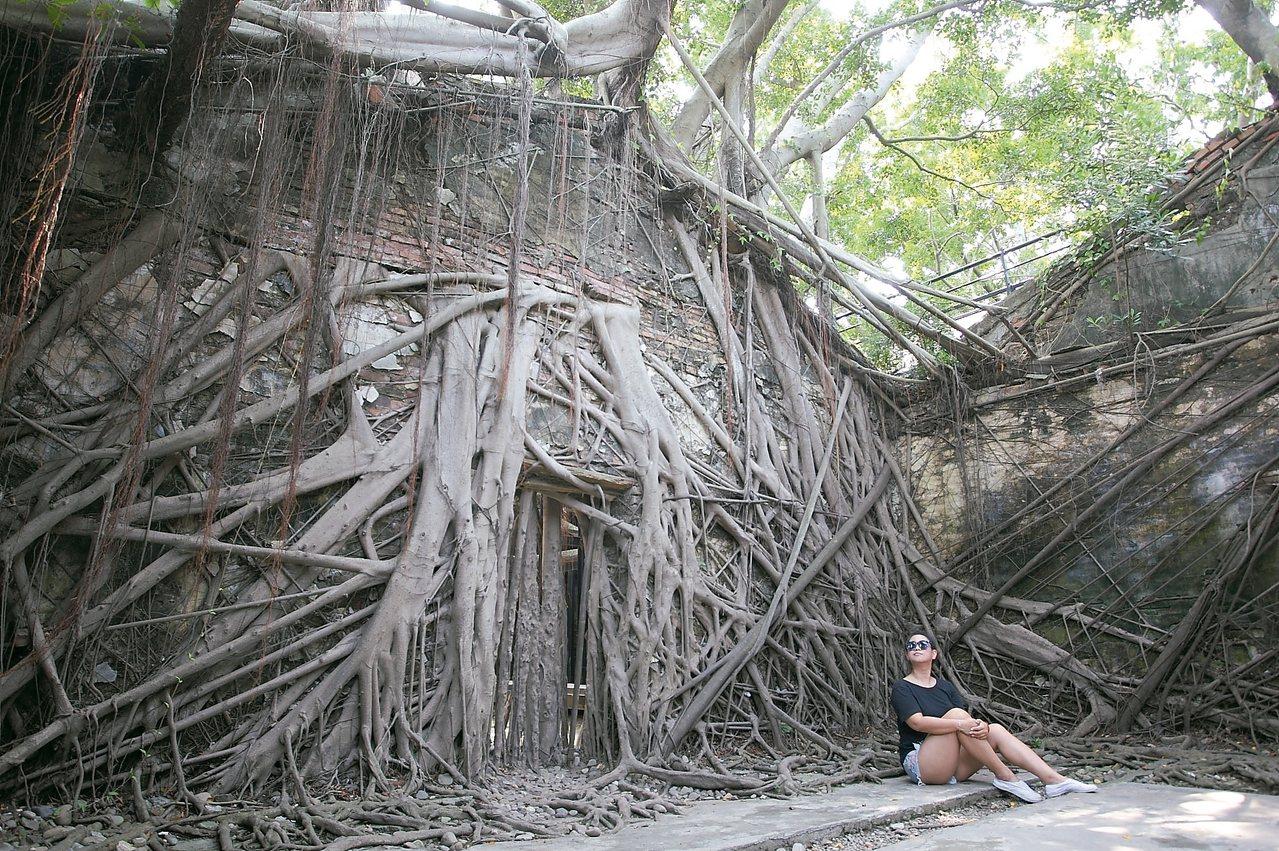 被樹根盤繞的安平樹屋,有著「台灣吳哥窟」的美譽。