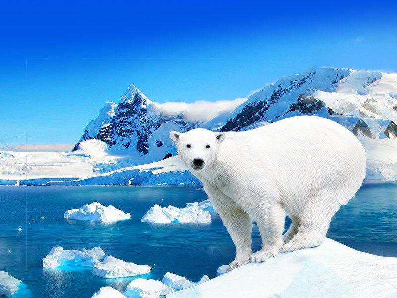 前往北極探訪北極熊,只要口袋深,近距接觸不是夢。圖/鴻鵠易遊提供