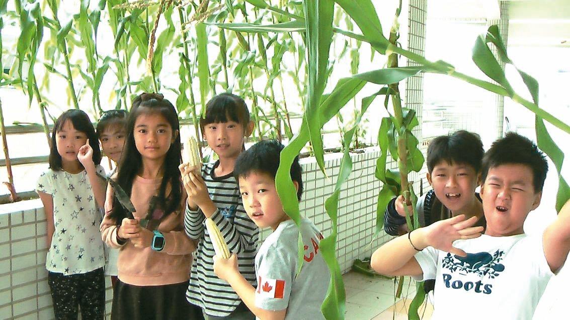 高雄市新上國小三年級星空家族師生,在「走廊農田」種玉米。 記者徐如宜/攝影