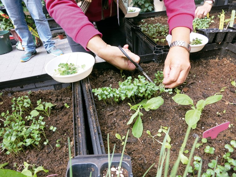 園藝治療是兼顧心理、生理、社交能力的全方位療法,也是讓長輩回春的魔法。 圖╱馮婉...