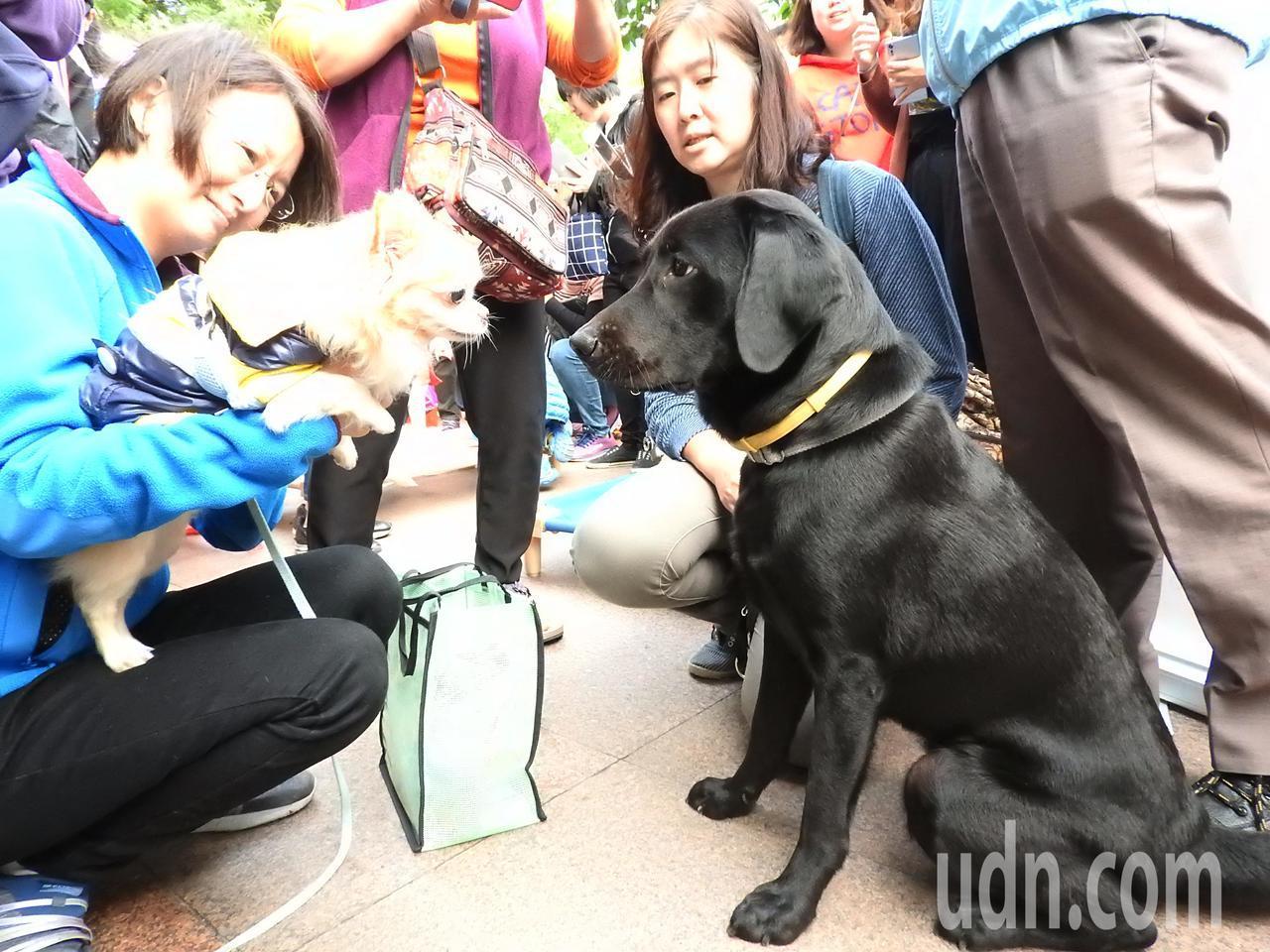 新北市新聞局、警察局、與惠光導盲犬基金會合作推出「2018警犬x導盲犬桌曆」今天...