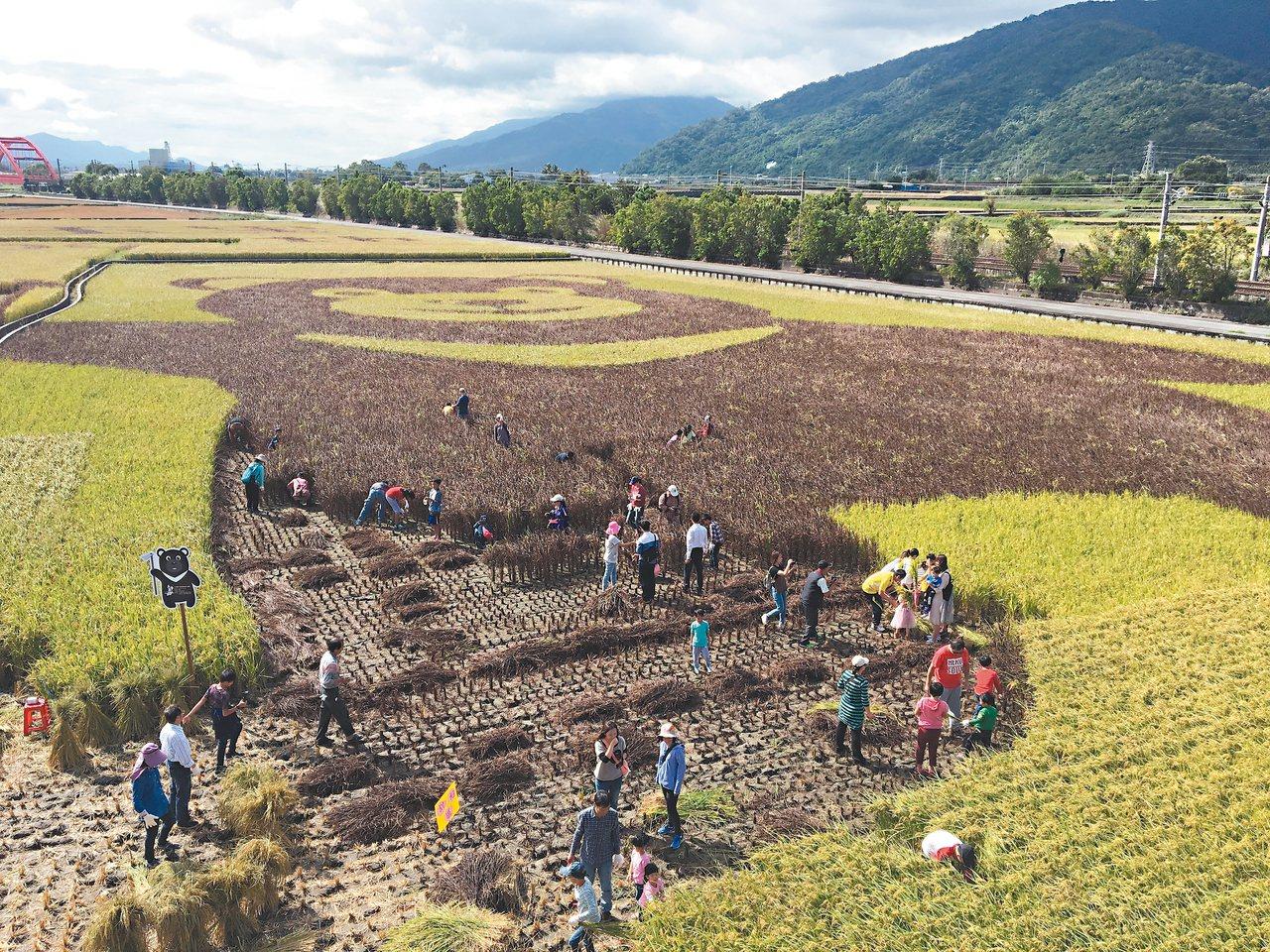 玉里熊讚彩繪稻田收成,昨天舉辦割稻體驗。 記者徐庭揚/攝影