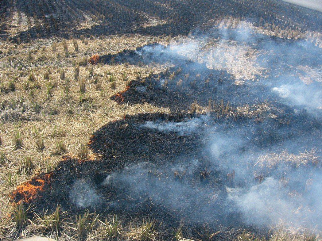 稻作收成期,許多農友無視空氣污染收割後照樣燒稻草。 報系資料照