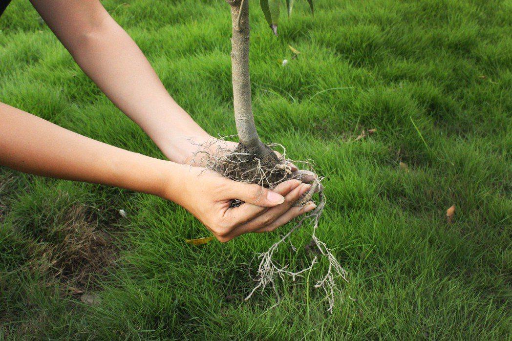 在雲林有一群努力復育沉香樹的農民們,在陳沺宏和陳品宏倆兄弟的帶領下,研究如何注入...
