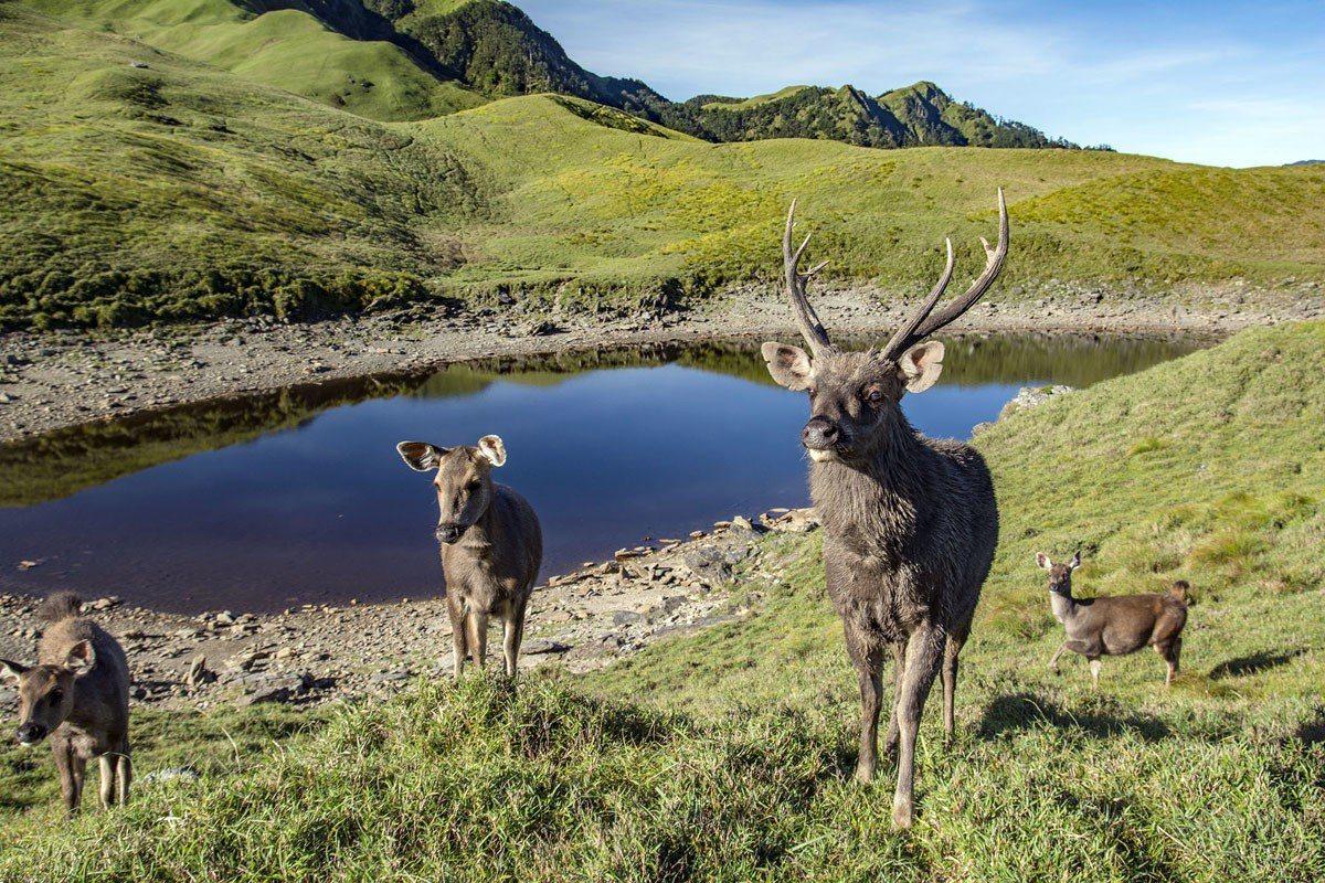 邂逅大水鹿‧能高安東軍的白石池 被公認台灣中央山脈稜線最美麗的縱走路線,分佈著許...
